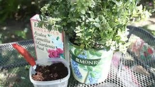How to Take Care of a Potted Blueberry Bush : Garden Space
