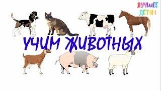 Животные. Учим животных для детей на русском Лучшее детям