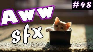 Aww Que Tierno SFX #48 | Awww Que Lindo Efecto De Sonido