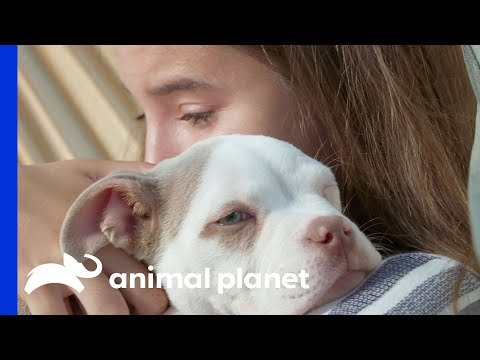Amanda And Her Kids Try To Give This Pup The Best Life Possible | Amanda To The Rescue