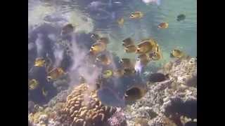 Дайвинг в Египте(Дайвинг на Красном море в заповеднике Рас Мухаммед., 2014-12-06T20:17:57.000Z)