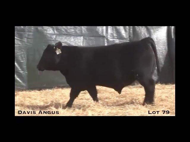 Davis Angus Lot 79
