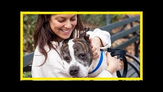 | Dog Rescue StoriesNew Study Reveals That More Homeless Animals Are Getting A Second Chance At Life