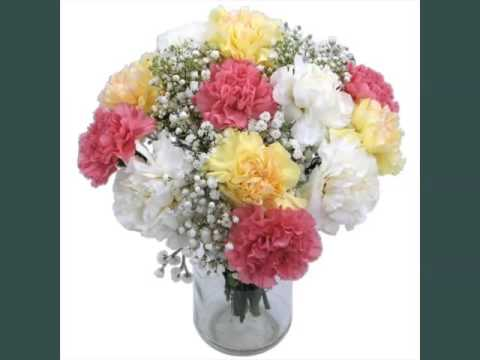 3c9c2b7282778 Pretty And Lovely Flower Pictures | Carnation Flower Bouquet - YouTube