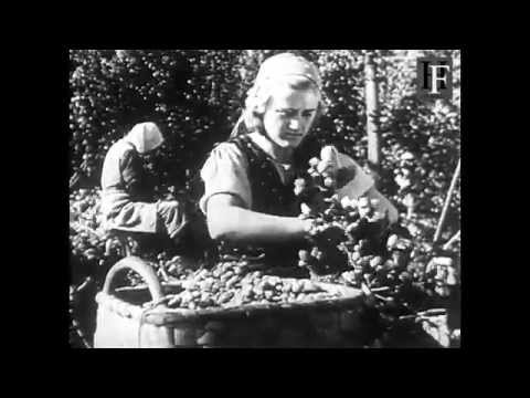 Old Original German WWII Propaganda Film - Farming