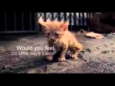 Kucing Yg Malang Doovi