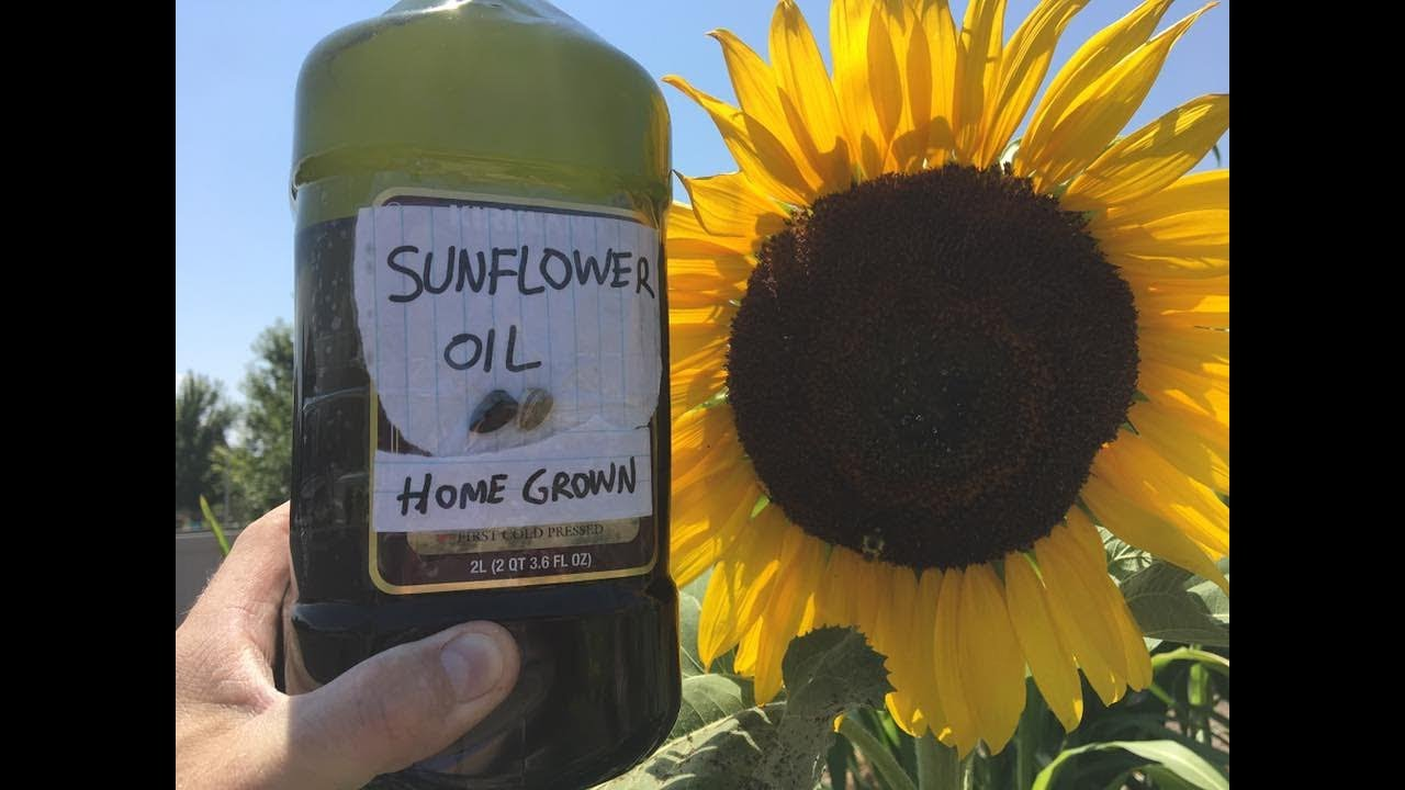 2 Ways To Use Sunflower Seed Oil For Smoother Skin picture