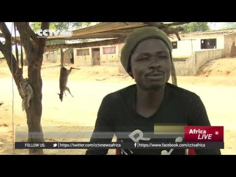 Angola clamps down on illegal bushmeat trade