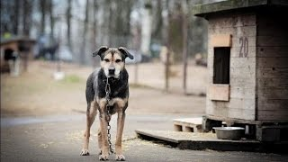 NO CHAINS AND ALL SENIOR DOGS IN WARM DOG HOUSES!