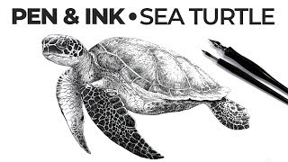 Pen and Ink Draẁing -