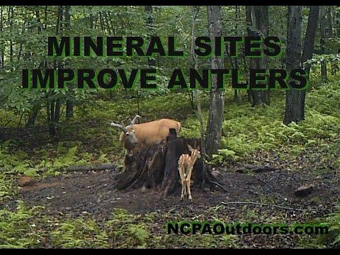 Mineral Sites Improve Antlers