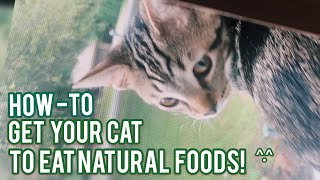 How To Get Your Cat To Eat Natural Food