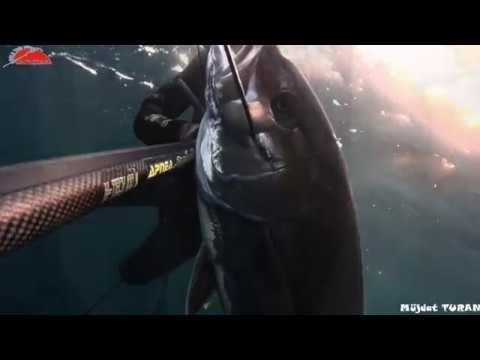 Akya avı - Amberjack hunting