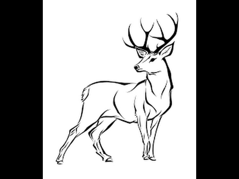how to draw a mule deer the initial linework suggests a hint of