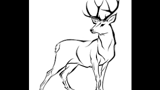 How to draw White tailed deer full body Drawing in steps