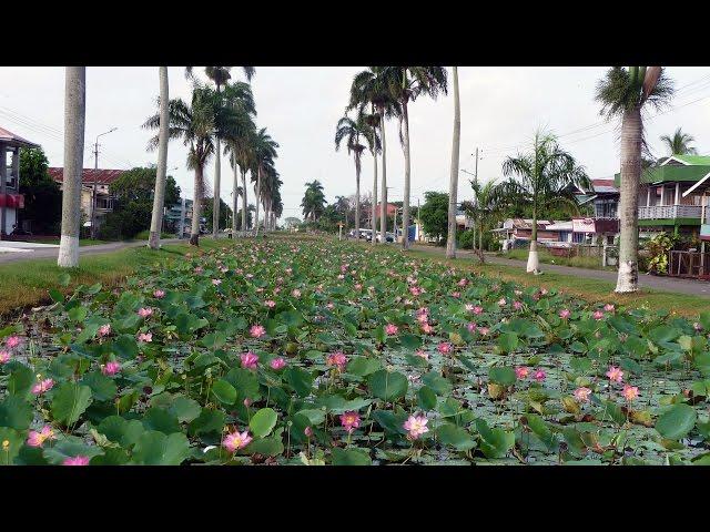 Nickerie - Suriname