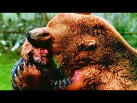 The bear killed the trainer. Only the choicest frames / Bear attack on a person