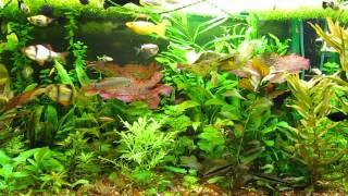 Мой голландский аквариум