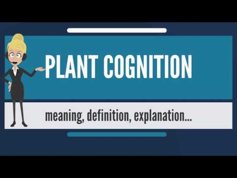What is PLANT COGNITION? What does PLANT COGNITION mean? PLANT COGNITION meaning & explanation