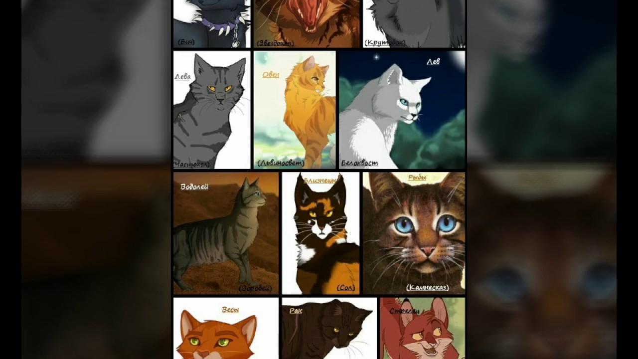тест кто ты из коты воители с картинками этот период