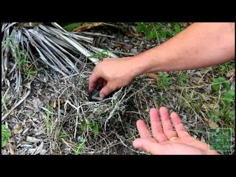 What to do if you find a fallen baby bird or nest - Tips from a Wildlife Biologist