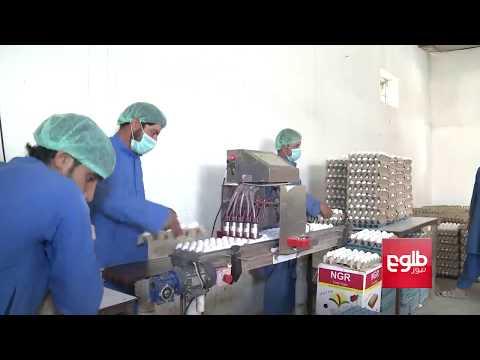 فارمهای مرغداری کشور سالانه ۵۰۰تُن گوشت به بازارها عرضه میکنند