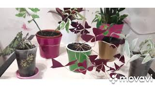 Комнатные растения. Новиночки 😉