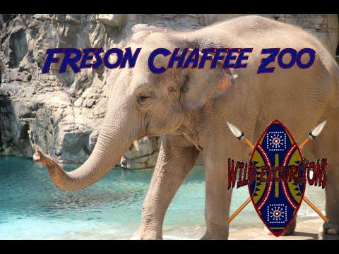 Wild Excursions: Fresno Chaffee Zoo (8-8-16)