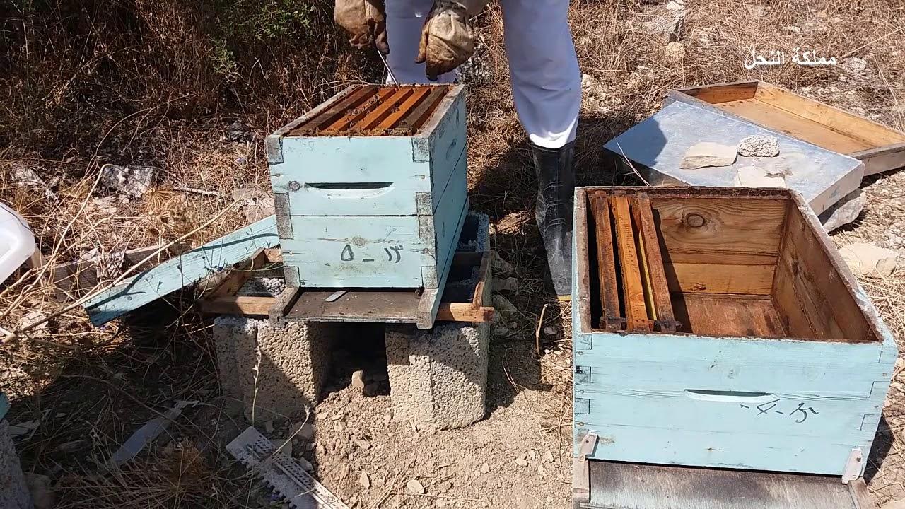 نقل خلية نحل من صندوق صغير إلى صندوق كبير تغيير صندوق خلية النحل Youtube