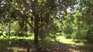 Miami Fruit Jungle - Opossum Trot Organic Farm