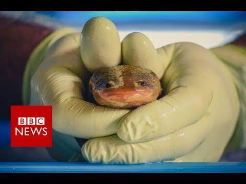 Meet the nuns saving a sacred species from extinction - BBC News
