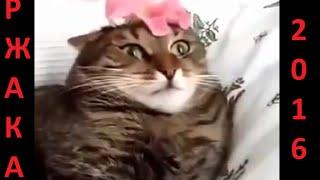 Смешное видео с людьми и животными. Подборка май 2016.