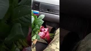 herbici sevgilim