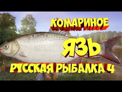 Фарм Язь Комариное рр4 русская рыбалка 4 Russian Fishing 4 Rf4 Алексей Майоров