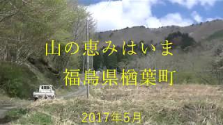 5月2日、地元住民のご協力を得て、楢葉町の山菜の調査に行ってきまし...