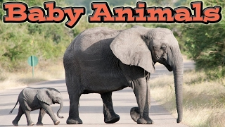 Cute baby animals | kids learning videos