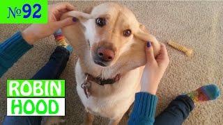 ПРИКОЛЫ 2017 с животными. Смешные Коты, Собаки, Попугаи // Funny Dogs Cats Compilation. Апрель №92