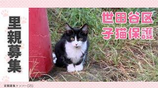 <再募集!>【子猫:里親募集】世田谷区4姉妹:キカちゃんとシナちゃん