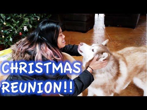 Husky Reunited with Family for Christmas!