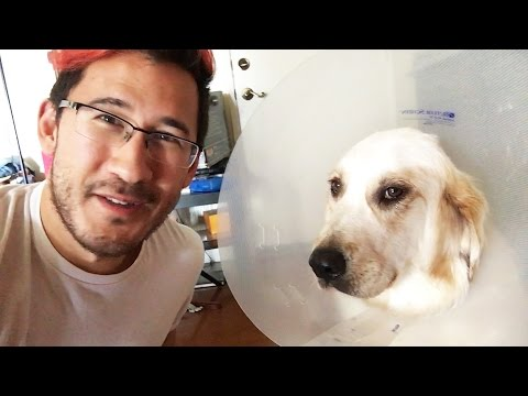 Chica Had Surgery