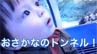 2015年11月、アキト1才。(成長順に動画をアップしています) ママとし...