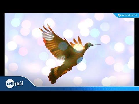 العالم يحتفل بيوم السلام العالمي  - نشر قبل 3 ساعة
