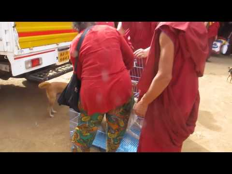part-1/23--catching-street-dogs-for-abc-&-vaccinations,-tibetan-refugee-settlement,-india