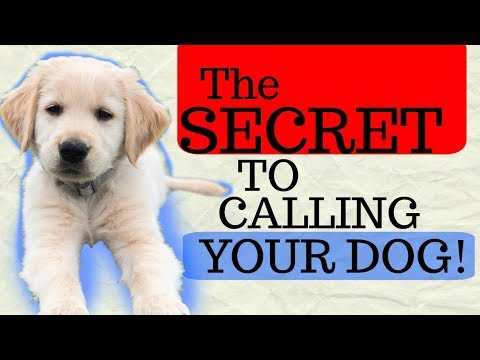 The Secret of recall training your dog! Dog Training with America's Canine Educator