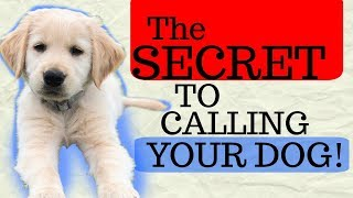 Fastest way to teach my dog to come + recall training puppy