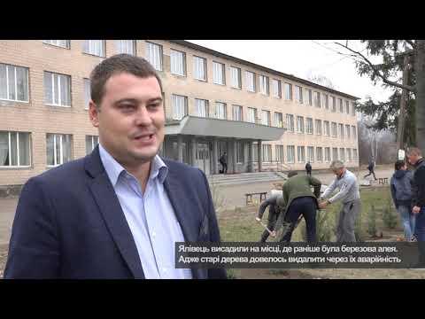Телеканал АНТЕНА: Нова алея ялівцю у Балаклеївській школі