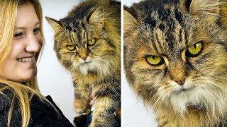 고양이가 싫어하는 11가지 행동