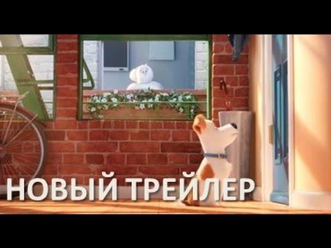 ТАЙНАЯ ЖИЗНЬ ДОМАШНИХ ЖИВОТНЫХ THE SECRET LIFE OF PETS TOYS  идем в кинотеатр смешные животные