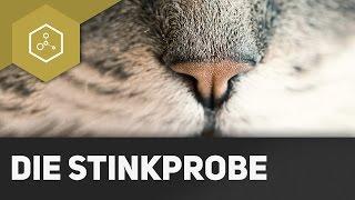 Stinkprobe - Nachweis von Sulfid-Ionen