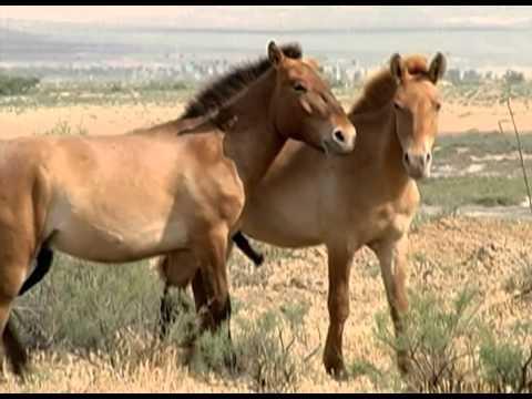 horses Gays club - YouTube
